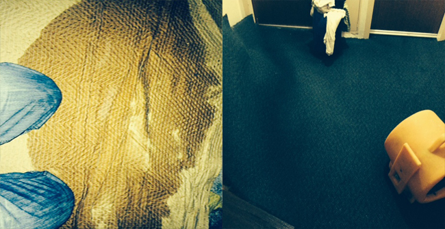 wet carpet extraction, Abbotsford, Sydney