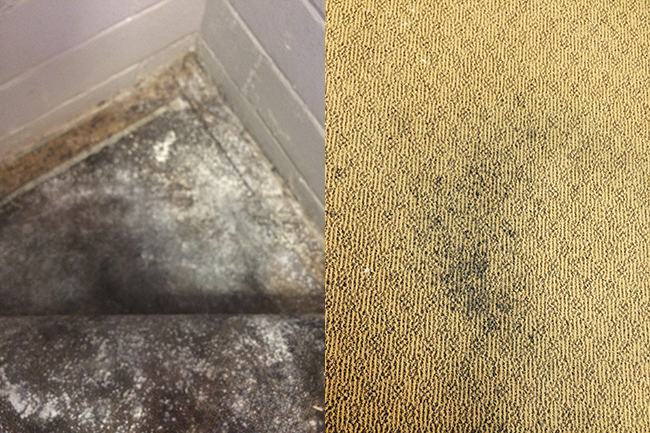prevent mould in your wet carpet