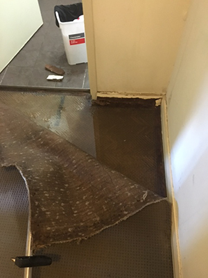 Wet Carpet Dehumidifier Floor Matttroy
