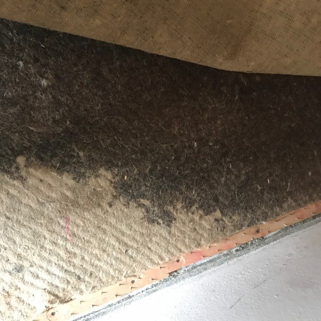 Smelly mould underlay 2018 by Refresh carpet cleaning, Sydney